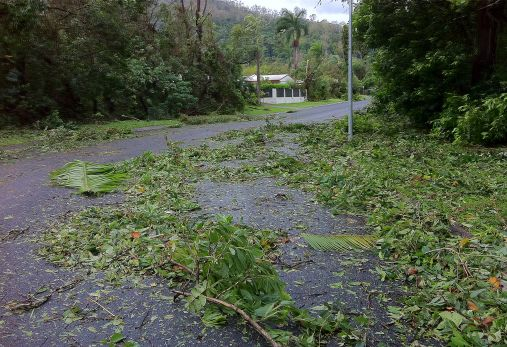 Damage to vegetation caused by Cyclone Yasi